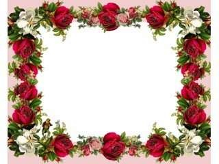 Manycam Effect Red Rose Border
